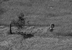 kapadokyalılar-06